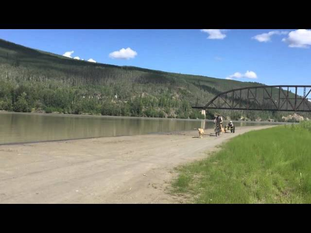 Muffy Davis - Alaska Challenge Handcycle Race goes Dog Mushing