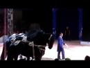 цирк братьев Гертнер (лошади)