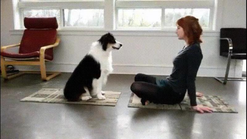 Дрессированая собака