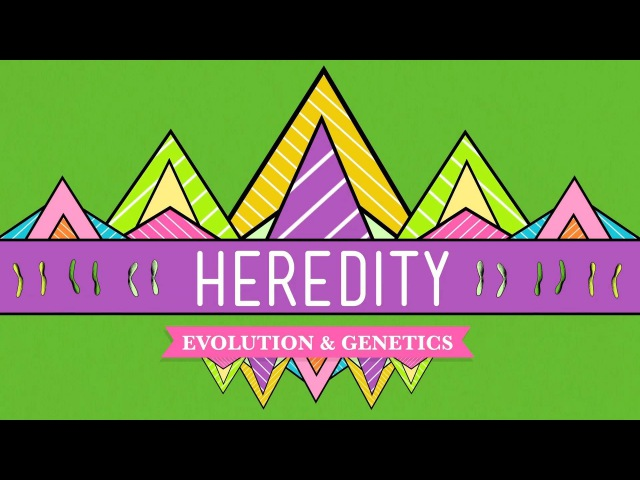 Heredity Crash Course Biology 9