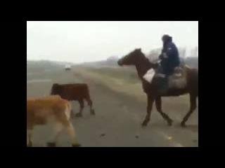 Башкирский гаишник пасет коров...