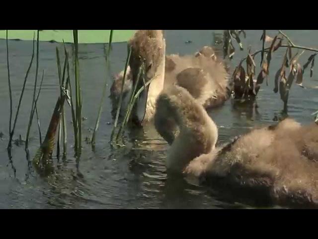 Дельта Волги River Volga Delta
