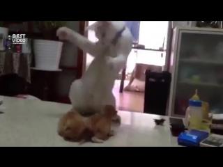 Кот и котята