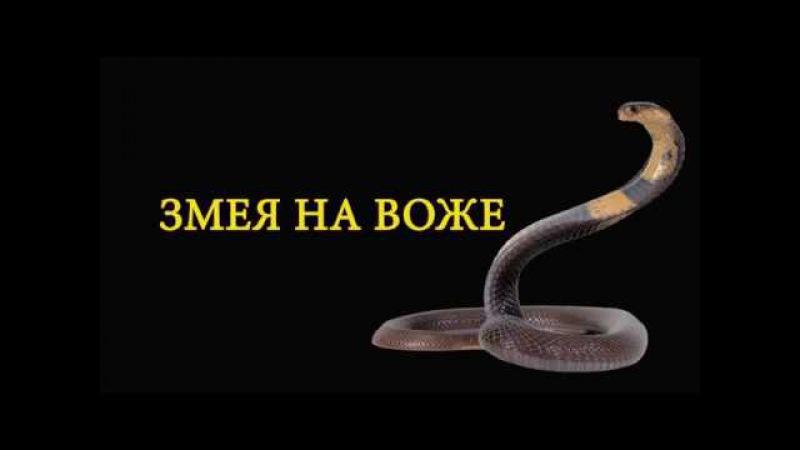 Змея на озере Воже Snake on the lake Vozhe