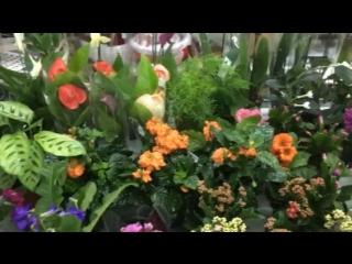 Свежий приход растений