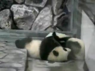 Панда-Борцуха