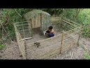 Primitive Wonder: Rescue Wild Dog and Building Wild dogs House