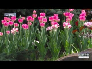 100 000 квітів: у харківському екопарку проходить Парад тюльпанів