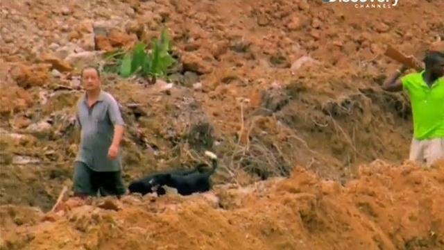 Золото джунглей 1 сезон 3 серия Выстрелы Jungle Gold 2012