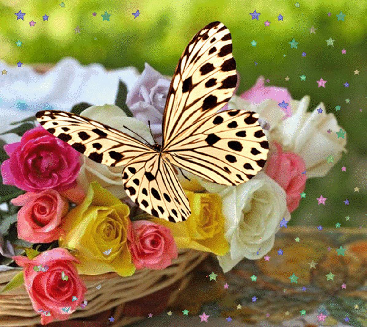 Гифки бабочки на цветах, день