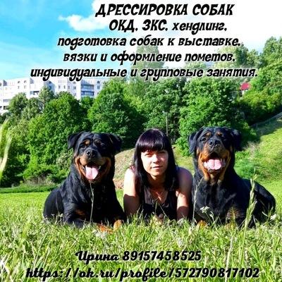 Стрижка для собак ржев