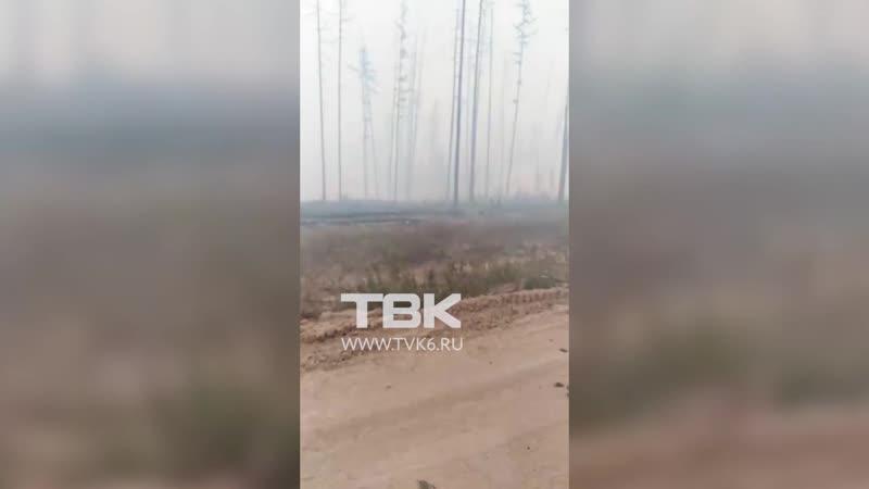 Сгоревший лес на севере Красноярского края