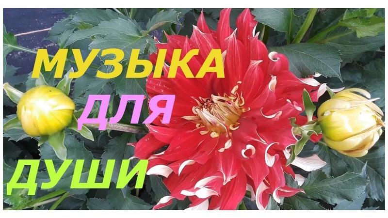 МУЗЫКА ДЛЯ ДУШИ ЗАБВЕНИЕ музыка Сергей Грищук wmv
