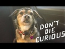 Tom Rosenthal Don't Die Curious Official Video