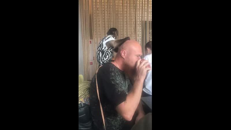 массаж головы капуцином