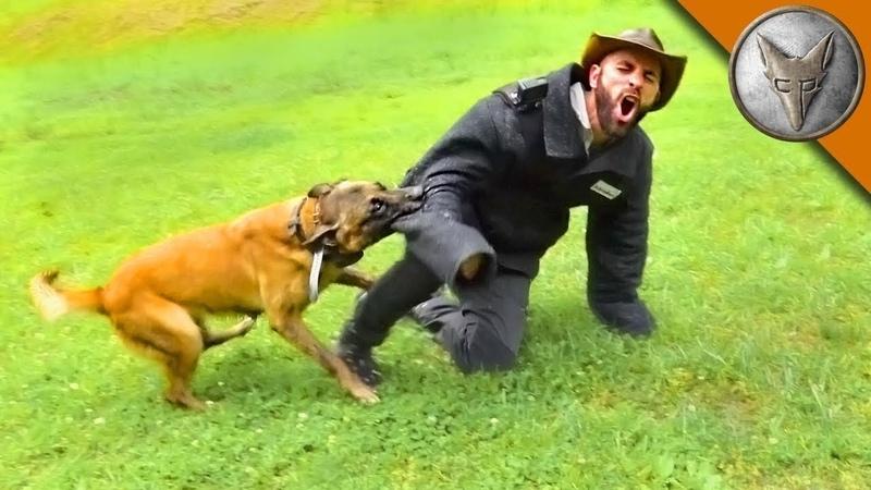 УКУС СОБАКИ ИЩЕЙКИ (Разыскная собака против человека) Brave Wilderness на русском