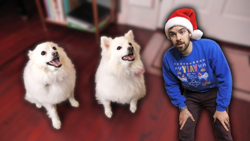 Telling our dogs they're adopted (Emotional) (YIAY 491)