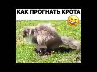ЮМОР ВИДЕО ПРИКОЛЫ