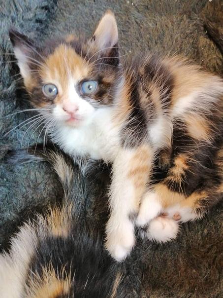 От вислоухой мамы выкинутой на улицу, это последняя из её котят, метисочка. Сообразительный ребёнок, знает лоток