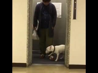 Dog's dance 😄
