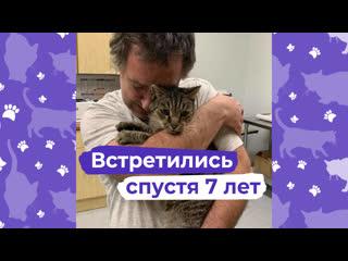 В США хозяин чудом нашёл своего кота спустя семь лет