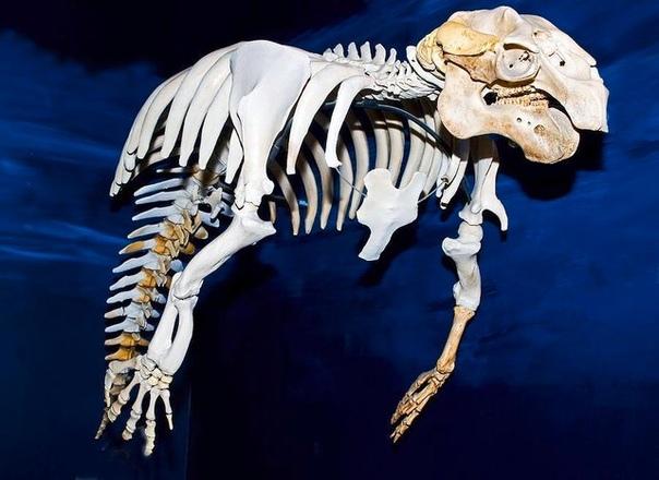 Скелет ламантина похож на страшного летающего демона