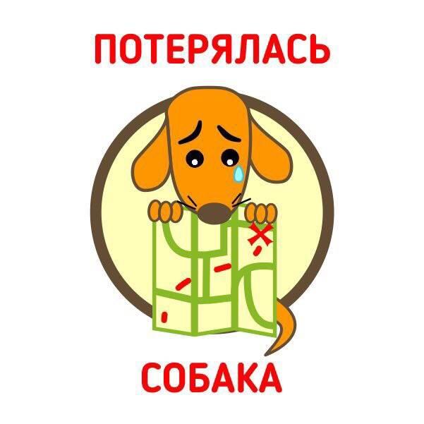 Собака пропала в картинках