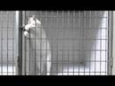 Кот взломщик Cat cracker