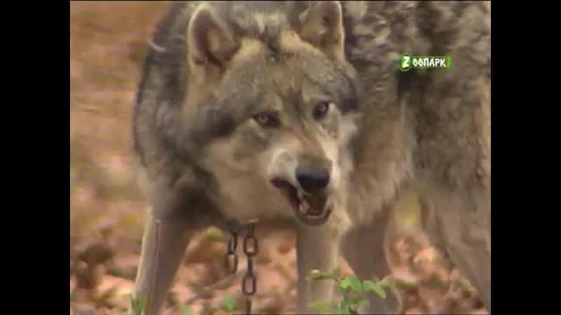 Путешествие в животный мир Откройте рот пошире