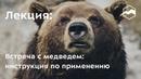 Встреча с медведем: инструкция по применению