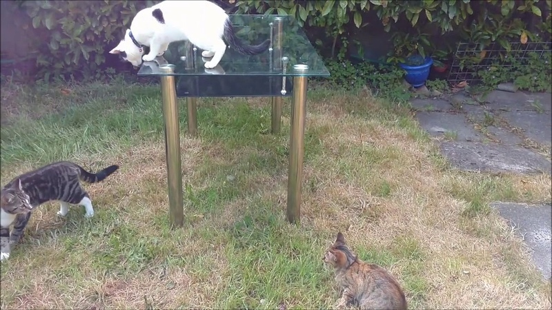 Cute cats playing and running Funny kitten chasing cat Let's play together