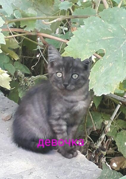 #ищу_дом@vmestepnz_animals Котята ищет дом  Город: Пенза
