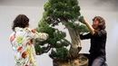 Shinji Suzuki's Bonsai demonstration