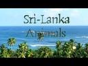 Sri Lanka animals 2019