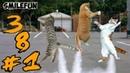 СМЕШНЫЕ КОШКИ 2020 КОШКИ Приколы Котами и Кошками Funny Cats