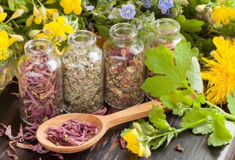 Можно ли применять лекарственные травы для лечения заболеваний