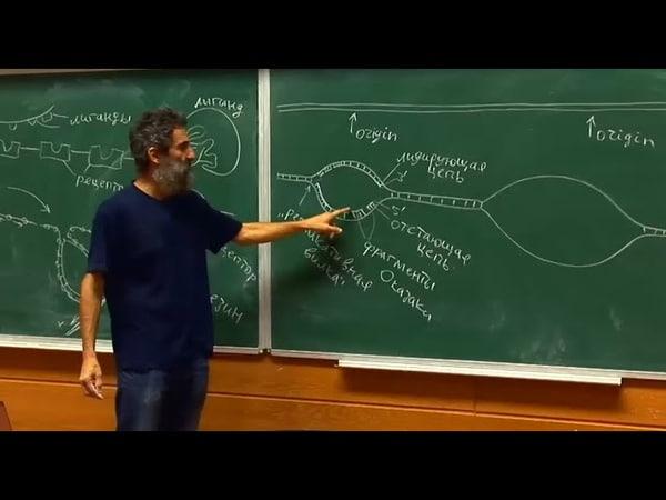 Лекция 4. Трансляция, эндоцитоз, репликация ДНК. Окштейн И.Л., МФТИ