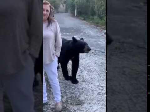 Oso salvaje acaricia el pelo a mujer en Monterrey