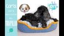 Лежанка для собаки кошки Cama para mascotas de trapillo DIY perro y gato