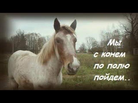Выйду в поле с конем Мопс Арни vs Кони Pug Arnie vs Koni кони мопс УМА horses pug