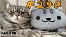 ПРИКОЛЫ С КОТАМИ 2019 КОТЫ Смешные Кошки 2019 Funny Cats