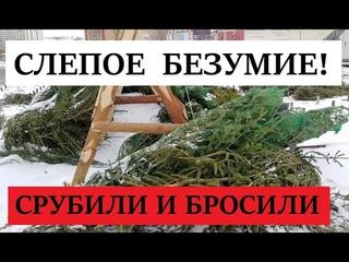 Кладбище хвойных деревьев - барыги бросили елки, которые не успели продать к НГ!
