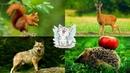 Дикие животные для детей. Развивающее видео