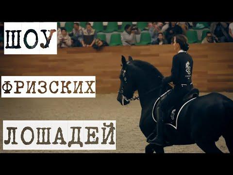 Шоу ФРИЗСКИХ лошадей на выставке Конная Россия 2019