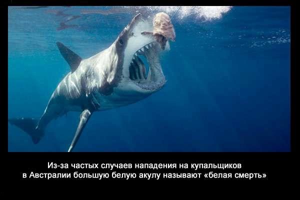 валтея - Интересные факты о акулах / Хищники морей.(Видео. Фото) FZVwvzY0hCM