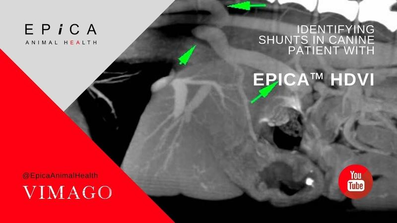 Обнаружение шунтов у собаки с помощью КТ Identifying Shunts in Canine Patient with Epica™ HDVI