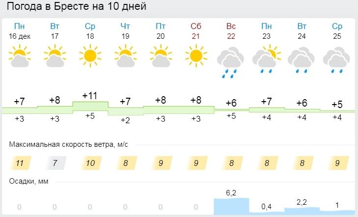Привет, весна. На следующей декабрьской неделе в Бресте до +10