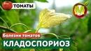 🍅 БОЛЕЗНИ ТОМАТОВ Кладоспориоз Томатов и Меры Борьбы