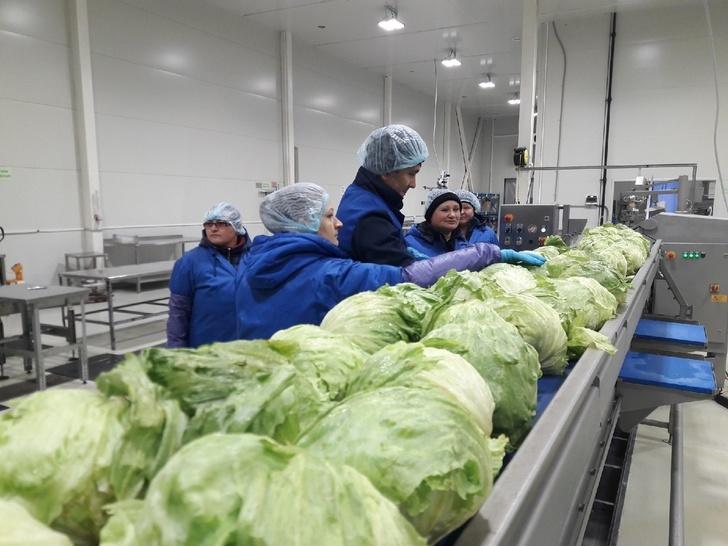 28 новых российских производств в ноябре, изображение №22