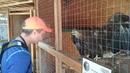 Разговор с орланом. Как разговаривать с птицами Язык животных. Орлан-белохвост.